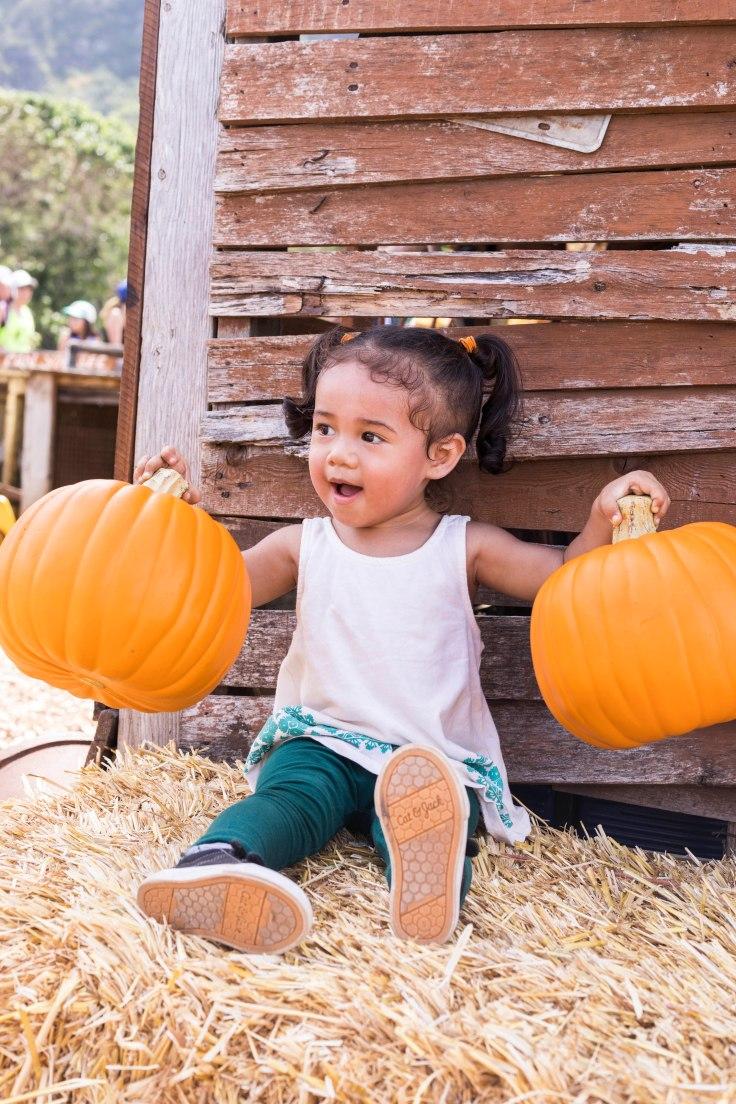 PumpkinPatch1-41